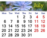 calendar for the July of 2015 with flowers of Cichorium